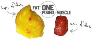one pound fat size vs. muscle